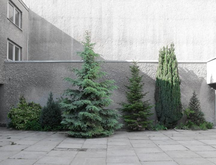 st agnes grid garden three 120820 copia copy